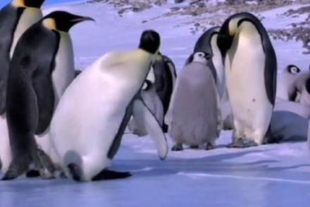 Video: Die tollpatschigsten Pinguine der Welt