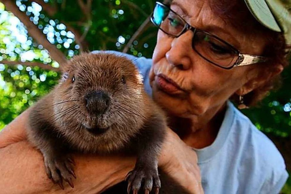 """The Beaver Believers - Meet Sherri Tippie"" (Foto: Veranstalter)"