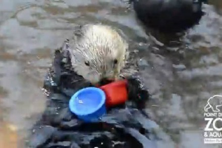Video: Seeotter Nellie und die Stapelbecher