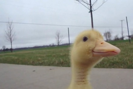 Video: Spaziergang mit Ente