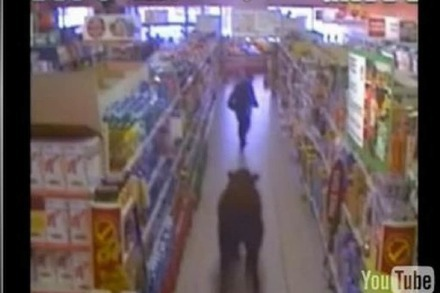 Video: Ein Ochse im Supermarkt